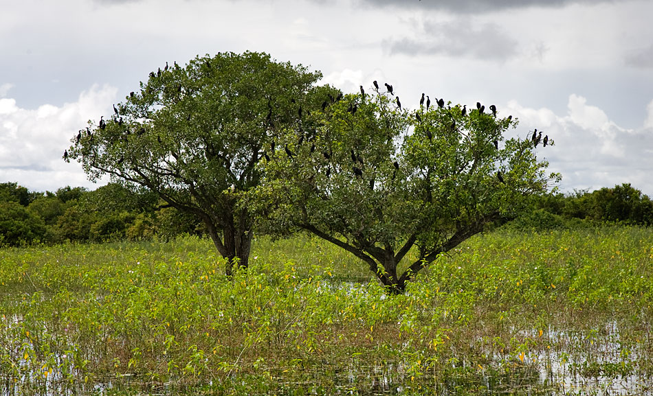 Album,Brazil,Pantanal,Pantanal,3,shafir,photo,image