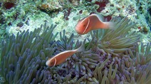 Album / Australia / Great Barrier Reef / Diving 14