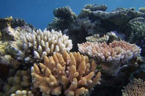 Album / Australia / Great Barrier Reef / Diving 15