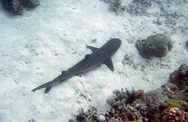 Album / Australia / Great Barrier Reef / Diving 16