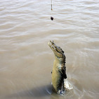 Album / Australia / Northern Territory / Jumping Crocodile Cruise / Jumping Crocodile Cruise 3