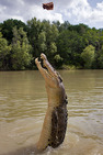 Album / Australia / Northern Territory / Jumping Crocodile Cruise / Jumping Crocodile Cruise 5
