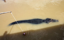 Album / Australia / Northern Territory / Jumping Crocodile Cruise / Jumping Crocodile Cruise 7