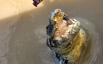Album / Australia / Northern Territory / Jumping Crocodile Cruise / Jumping Crocodile Cruise 8