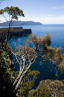Album / Australia / Tasmania / Tasman Coastal Trail / Waterfall Bluff 1