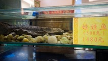 Album / China / Guangzhou / Volume 2 / Fish Restaurant / Fish Restaurant 10